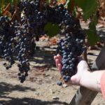 viña vik wine – 3