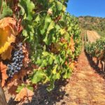 viña vik wine – 4
