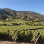 viña vik wine – 6
