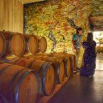 viña vik wine produção – 2