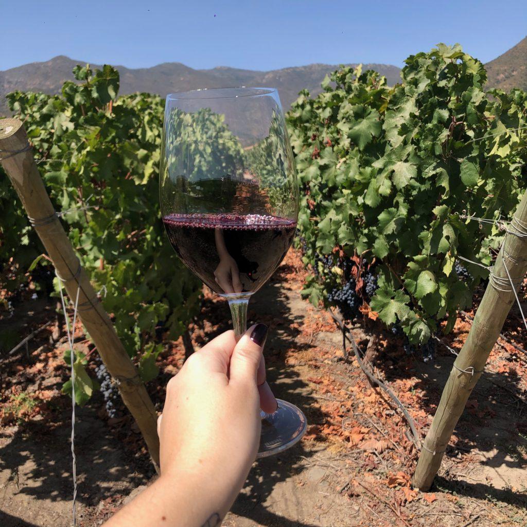 viña vik wine – vinhedos 1