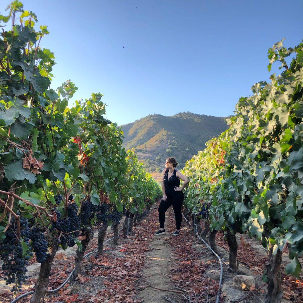 vik wine – parreiras de uva